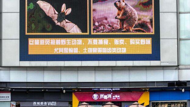 """Un equipo de epidemiólogos de la Organización Mundial de la Salud (OMS) se desplazó en enero a Wuhan para investigar el origen del nuevo coronavirus con un trabajo abierto a """"todas las hipótesis"""".  (EFE)"""