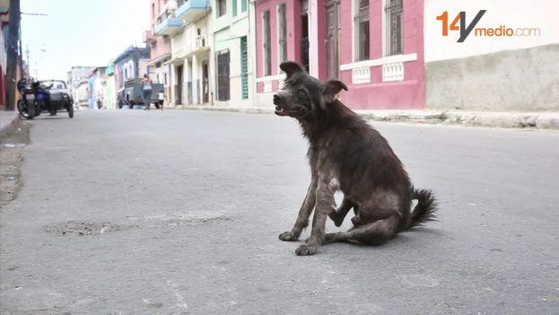 La emigración del Periodo Especial influyó también en el abandono masivo de las mascotas de quienes huían del país. (14ymedio)