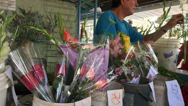 El negocio de las flores está desplazando también el cultivo de viandas y vegetales. (14ymedio)