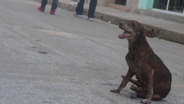 Un perro callejero. (14ymedio)